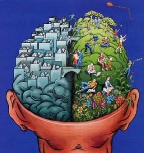 hersen-helften