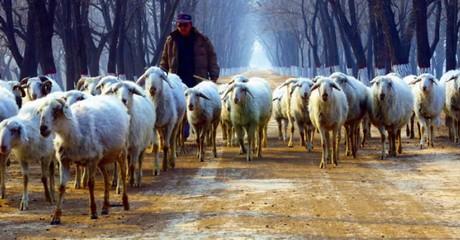 De herders kregen een nieuwe plek, door de aankondiging van Jezus' geboorte.